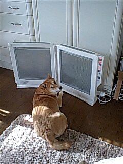 パネル犬その2